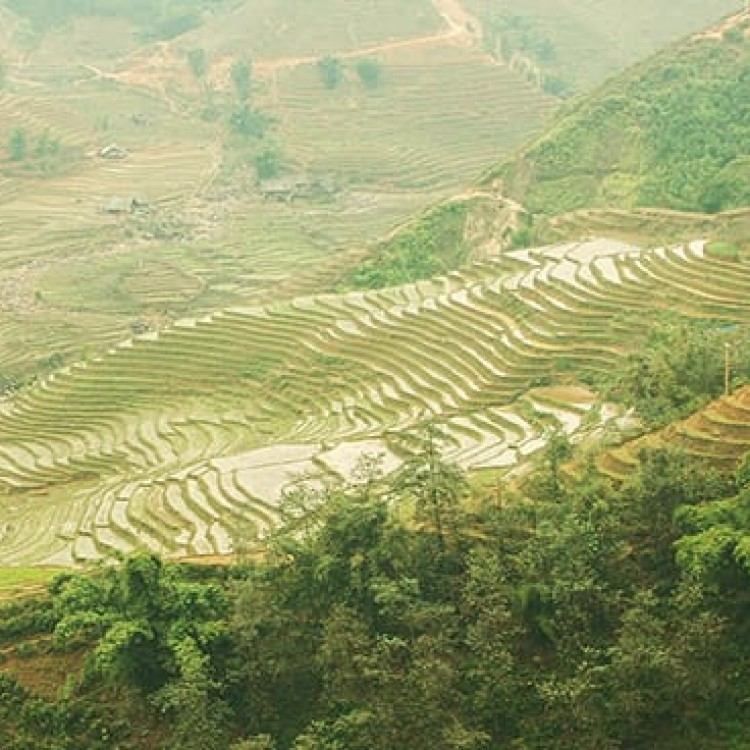Chase | Vietnam - A 002c Rice terraces